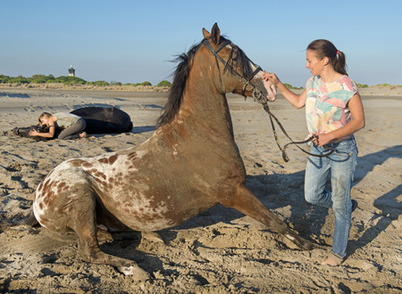 girl on horse: girl playing with horse on the beach