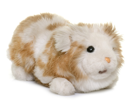 cuddly toy: cugdly toy guinea pig in front of white background