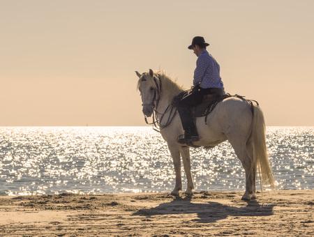 uomo a cavallo: cavaliere a cavallo che cammina sulla spiaggia di sera Archivio Fotografico