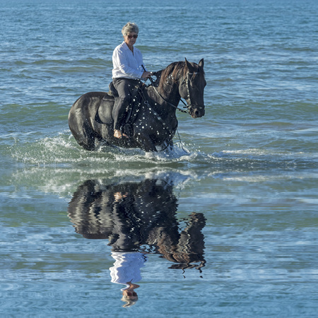 woman and horse: woman horse riding her black stallion in the sea
