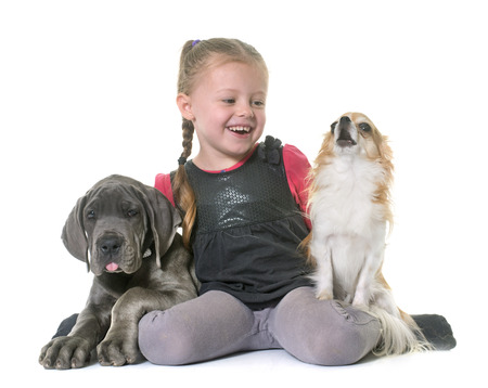 sorcery: puppy great dane and child in front of white background