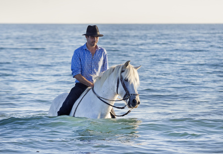 horseman: horseman and his Camargue horse in the sea
