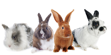 group pf rabbit in front of white background