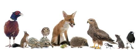 白い背景の前にヨーロッパの野生の動物のグループ