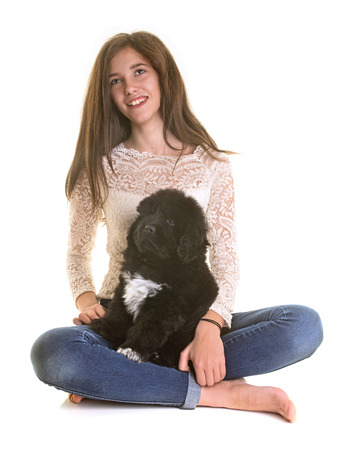 puppy newfoundland dog and teen in front of white background