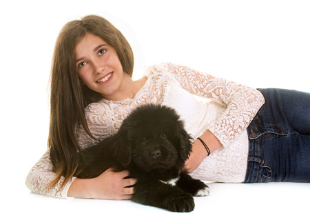 black and white newfoundland dog: puppy newfoundland dog and teen in front of white background