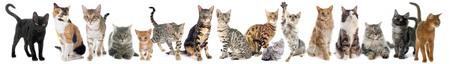Grupo de gatos sobre un fondo blanco