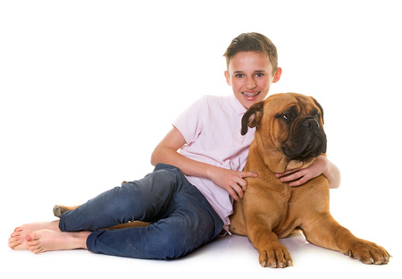 puppy bullmastiff and child in front of white background
