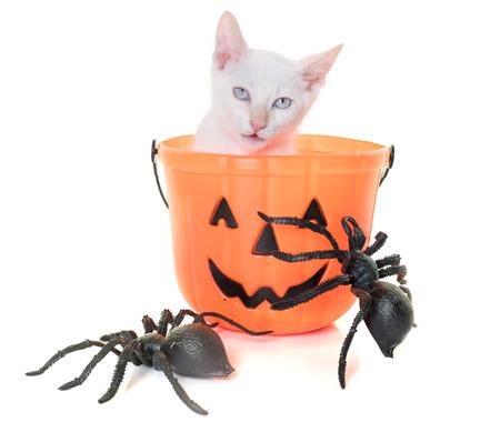 Joven gatito delante de fondo blanco Foto de archivo - 84068856