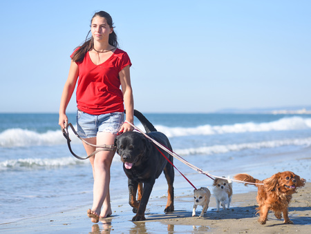 Woman and dogs walking on the beach Stock Photo