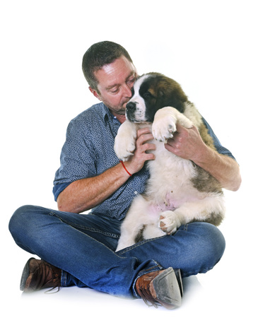 puppy saint bernard and his owner in front of white background