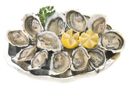 open oysters in front of white background