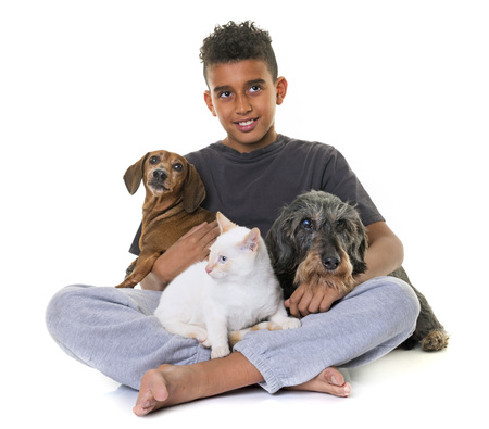 old dachshunds, kitten and boy in front of white background Stock Photo
