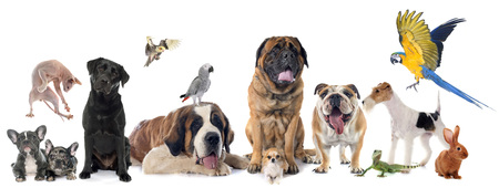 Grupo de mascotas delante de fondo blanco.