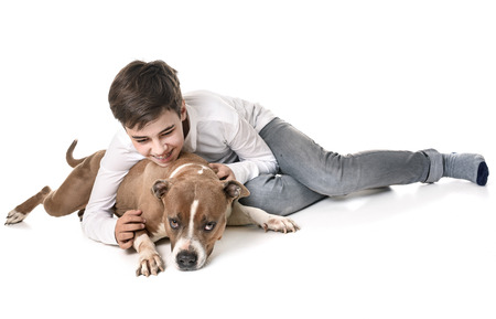 american staffordshire terrier and teen in front of white background Stock Photo