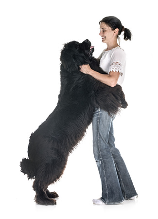 newfoundland dog and woman in front of white background Stock Photo - 102728468