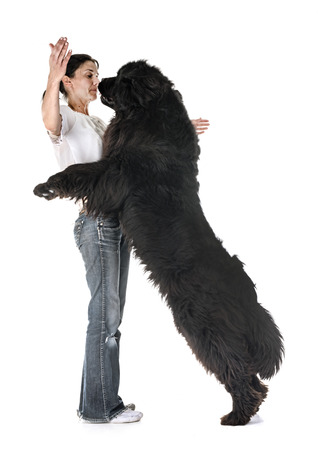 newfoundland dog and woman in front of white background Banque d'images - 102846917