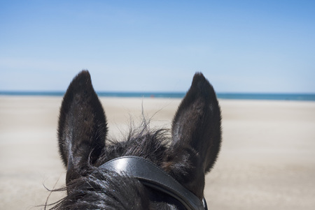 riding girl and her stallion on the beach Stok Fotoğraf