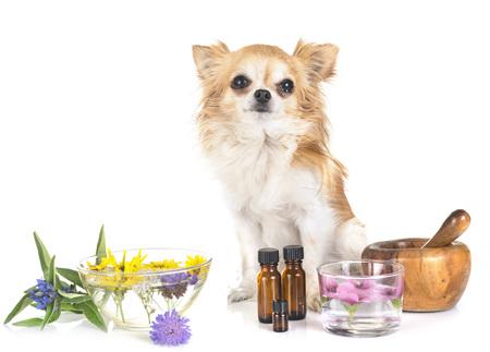 Hund und ätherische Öle vor weißem Hintergrund