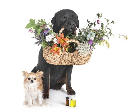 Hunde und Blumen vor weißem Hintergrund