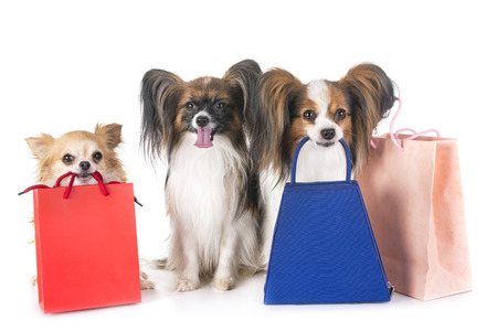 young dogs and bags for shopping and sales Stockfoto