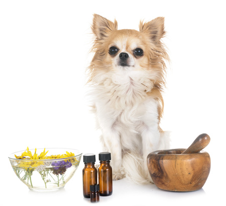dog and essential oils in front of white background