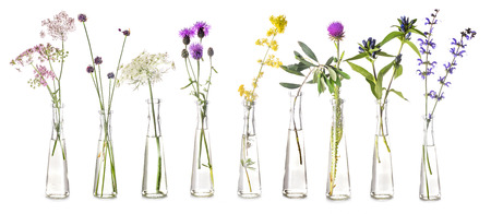 plants in test tube in front of white background