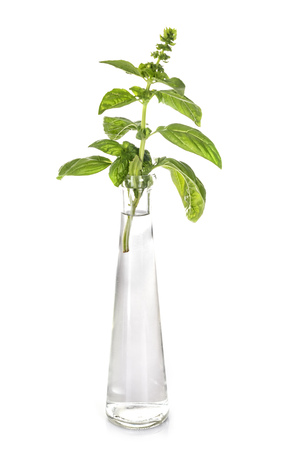 plant in test tube in front of white background
