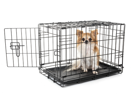 kleine hond en kooi voor witte achtergrond Stockfoto
