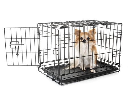 piccolo cane e gabbia davanti a sfondo bianco Archivio Fotografico
