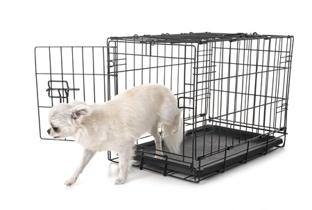 little dog and cage in front of white background Standard-Bild