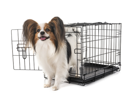 little dog and cage in front of white background Zdjęcie Seryjne
