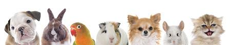 Grupo de mascotas delante de fondo blanco. Foto de archivo