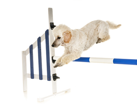 training of agility in front of white background