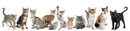 group of cats on a white background