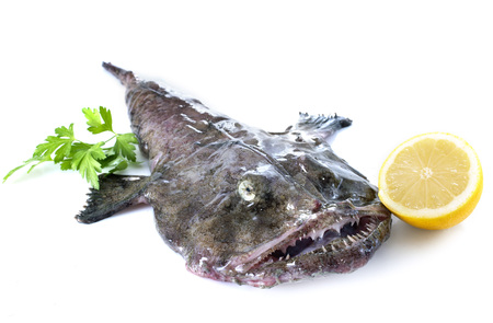 picture of monkfish in front of white background 스톡 콘텐츠 - 115133970