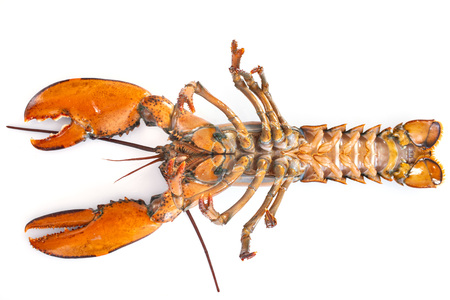 back of lobster in front of white background