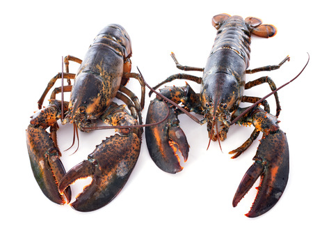 two lobsters in front of white background Фото со стока