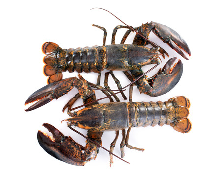 two lobsters in front of white background Imagens