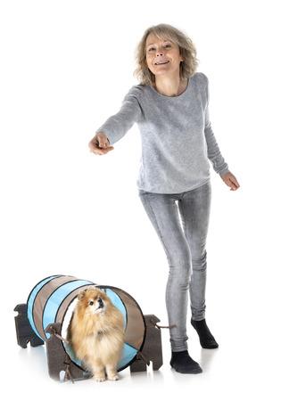 little dog training in agility Reklamní fotografie