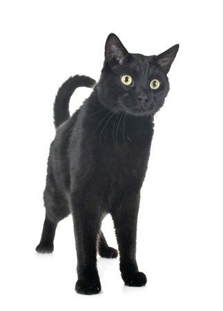 black cat in front of white background