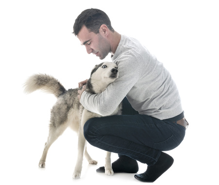 siberian husky and man in front of white background