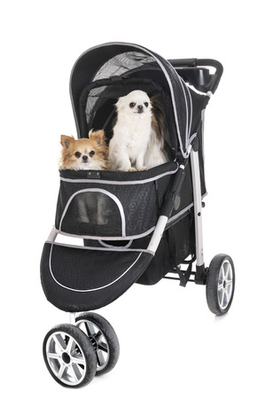 pushchair for dog in front of white background 免版税图像