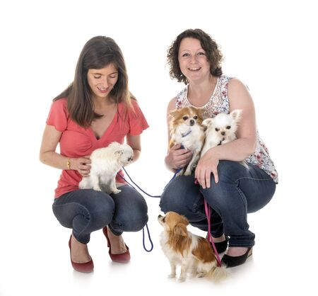 little chihuahuas and women in front of white background