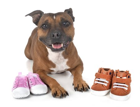 dog and baby slippers in front of white background 写真素材