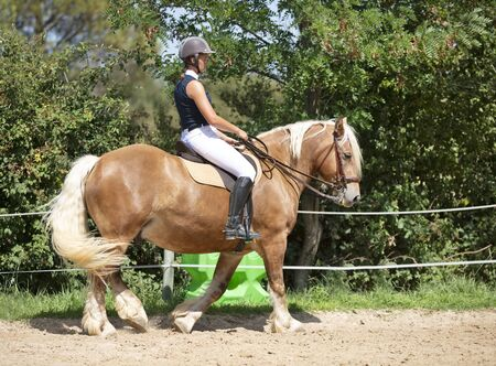 riding girl are training her young horse
