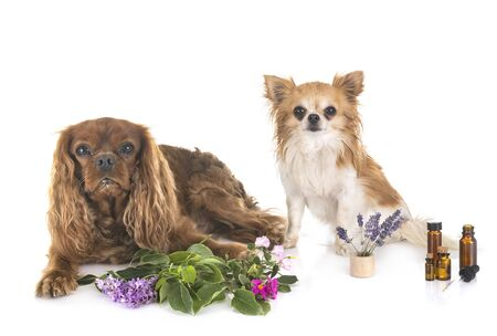 alternative medicine for dogs in front of white background