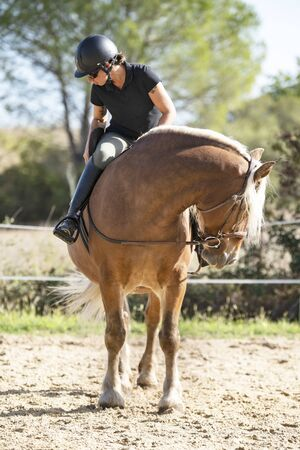 riding girl are training her comtois horse