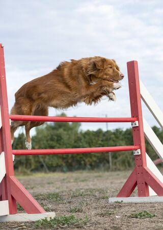 training of agility in a dog school