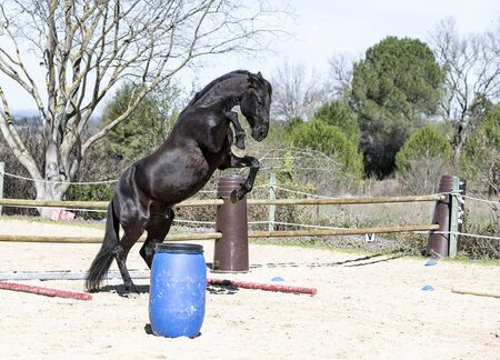 riding girl are training her black horse Banco de Imagens - 142151647